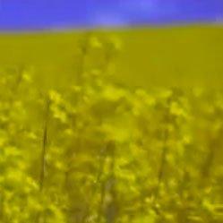 Monsanto – Yield Ready Canola